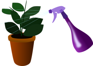 Houseplant and water spray