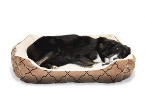 A dog in his bed