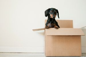 last-minute move to Northwood NH - a dog in a moving box