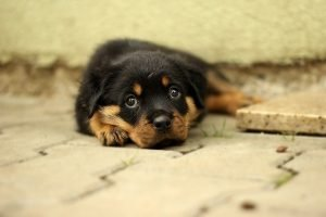 A puppy that shouldn't be placed in a storage unit