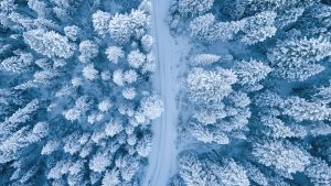 forest covered in snow