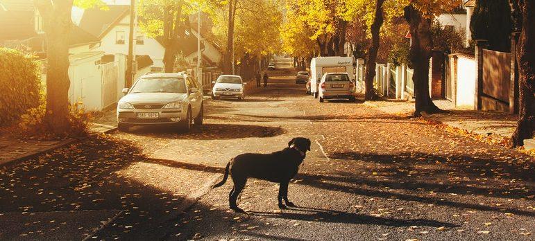 a dog on the street